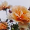 noryi userpic
