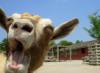 twasadark: Goat