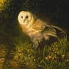Owlka