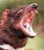 Невидимые глюки: Тасманийский дьявол
