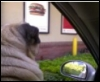 lucy_chronicles: buster fast food