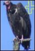 vulture_reborn userpic
