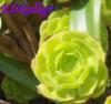 plant, Elskuligr