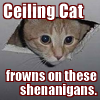 eclectic_writer: Lolcat - ceiling cat frowns