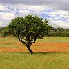 vse_tropinki userpic