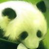 da_ren userpic
