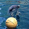 лето, дельфин, Море, вода, мячь
