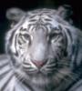 t_khomas userpic