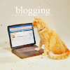 kitty - blogging