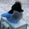 Douglas Triggs: snowbird snow
