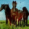 harpiegirl4: horses