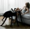 Schrodinger: spider