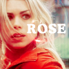 dw - rose - rose red