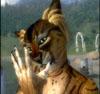 remixedcat userpic