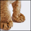 Lion: Paws
