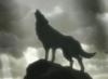 Волк на обрыве