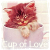 Giselle: cup cat