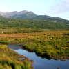 potter's marsh