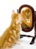лев в зеркале