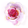 rosiettes userpic