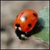 xladyxbeetlex userpic