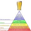 beerarchy of needs