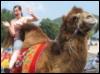 Great Wall Camel