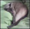 fennel_fox userpic