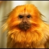 monkeyspinner