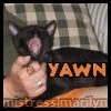 colin-yawn
