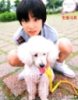 toma and toy poodle