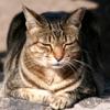 Медитирующая кошка