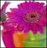 nicole0331 userpic