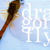 Megan: stock: dragonfly