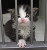 Kitten behind bars