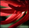 martagreeen userpic