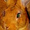 bunny!dean icon