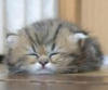 умиротворённо сплю