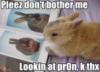 ellie_pierson: bunny porn