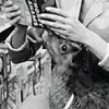 milkthistles userpic