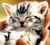 lisekit: kitten