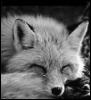 nytefox userpic