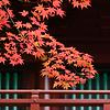 autumn red leaves by nomnomicons