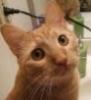 worried kitty