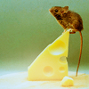 mouse + cheese