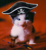 misc pirate kitten