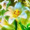 nattary userpic