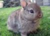 wolfkitn: bunny!