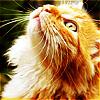 maeashley userpic