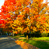 Autumn 2 - orange trees